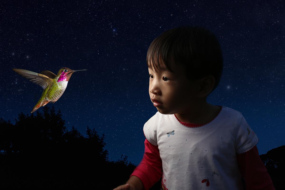 Web_bird