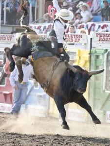 PRU Bull